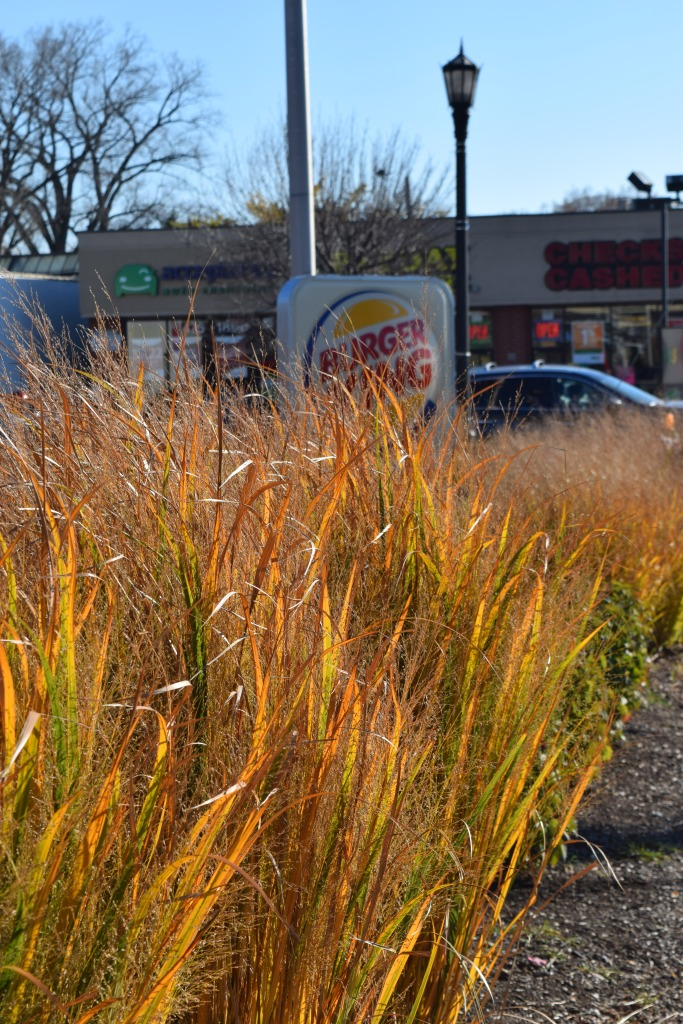 Grasses along the west side of the lot.