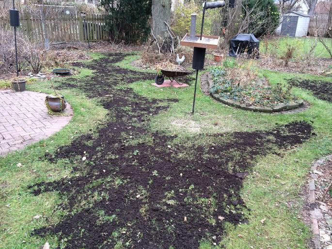 The Back Garden lawn after I spread compost on Sunday.