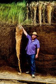kernza-root