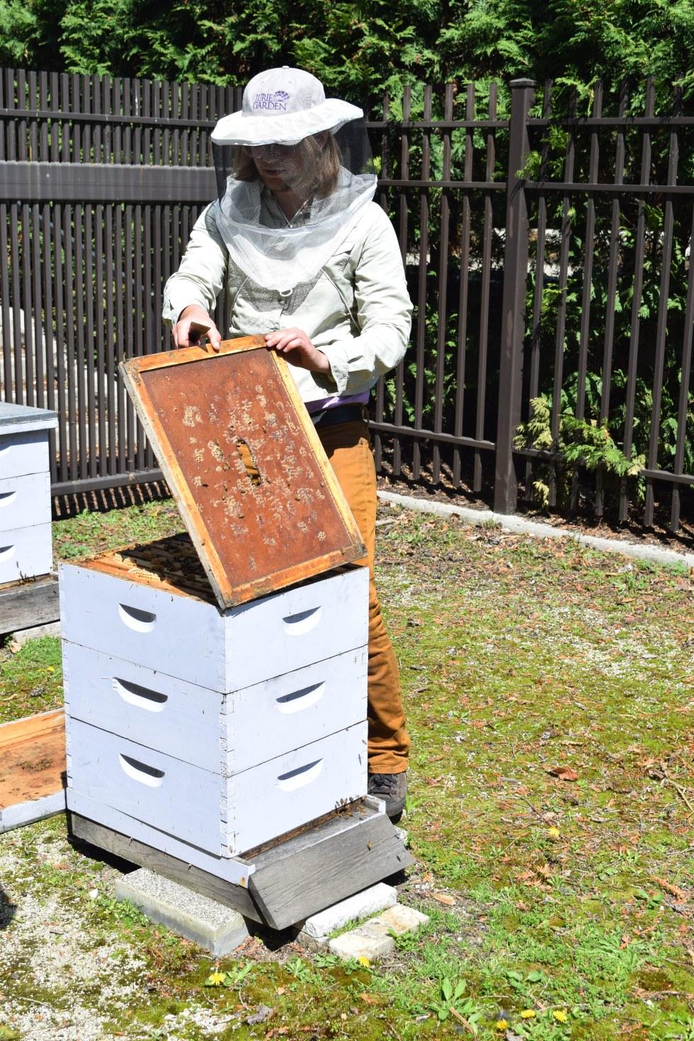 the lurie garden bee hives u2013 gardeninacity
