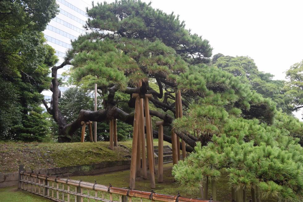 Tokyo\'s Hama Rikyu Garden in the Rain – gardeninacity