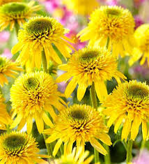 eccentric yellow