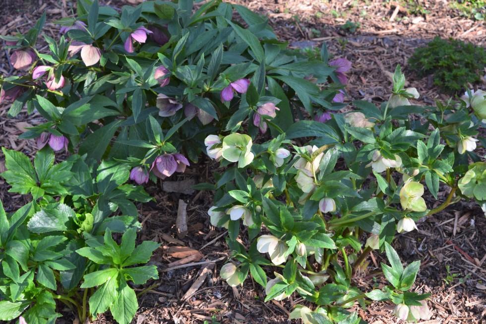 Weather Whiplash In The Garden – gardeninacity
