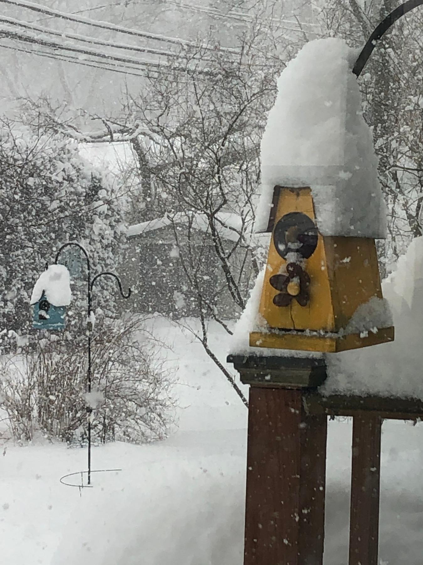 bird houses in snow